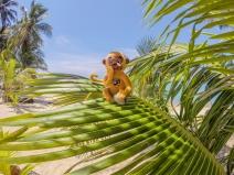 Auf der Sucher einer Kokosnuss